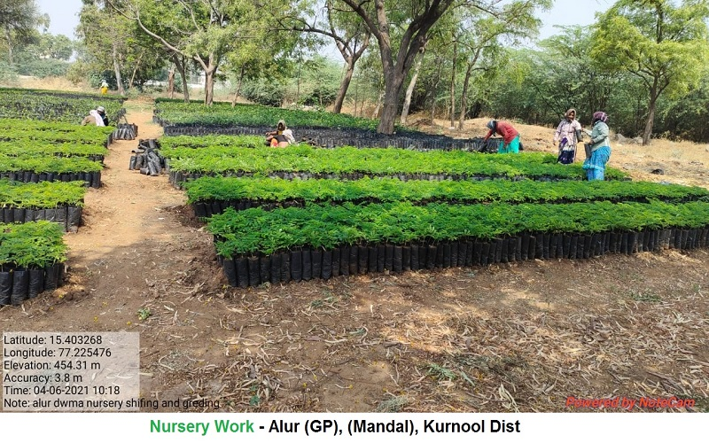 Andhra Pradesh AM Development of Nursery Kurnool District Alur Block Alur GP