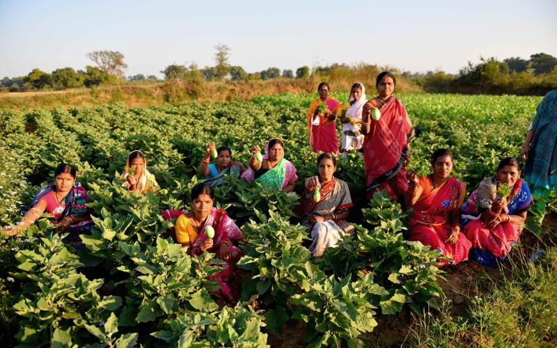 Vegetable Cultivation by NRLM group, Vill.Dubanali, Block-Chhendipada, Dist. Angul, Odisha